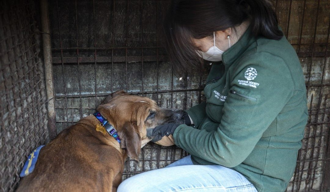 Humane Society International Collaboration